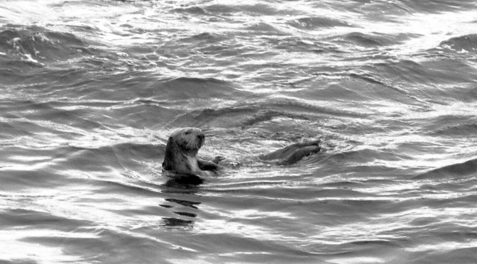 when the otters vanish, everything else begins to crumble